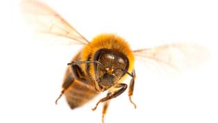 SOS for Honeybees